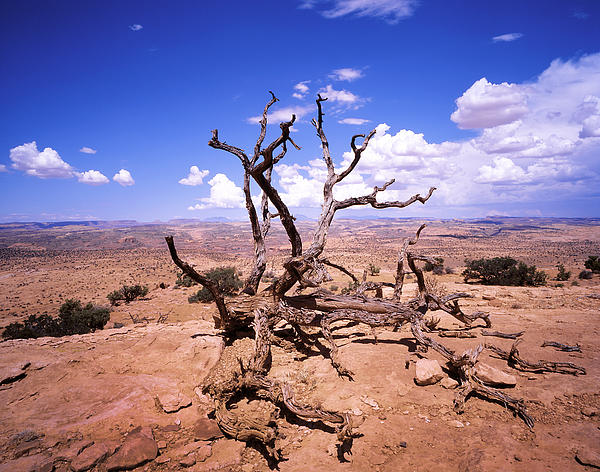 withered-tree-paria-canyon-rich-franco
